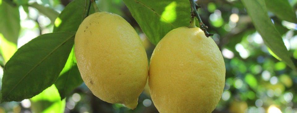turismo enogatronomico Campania - Limoni Sorrento